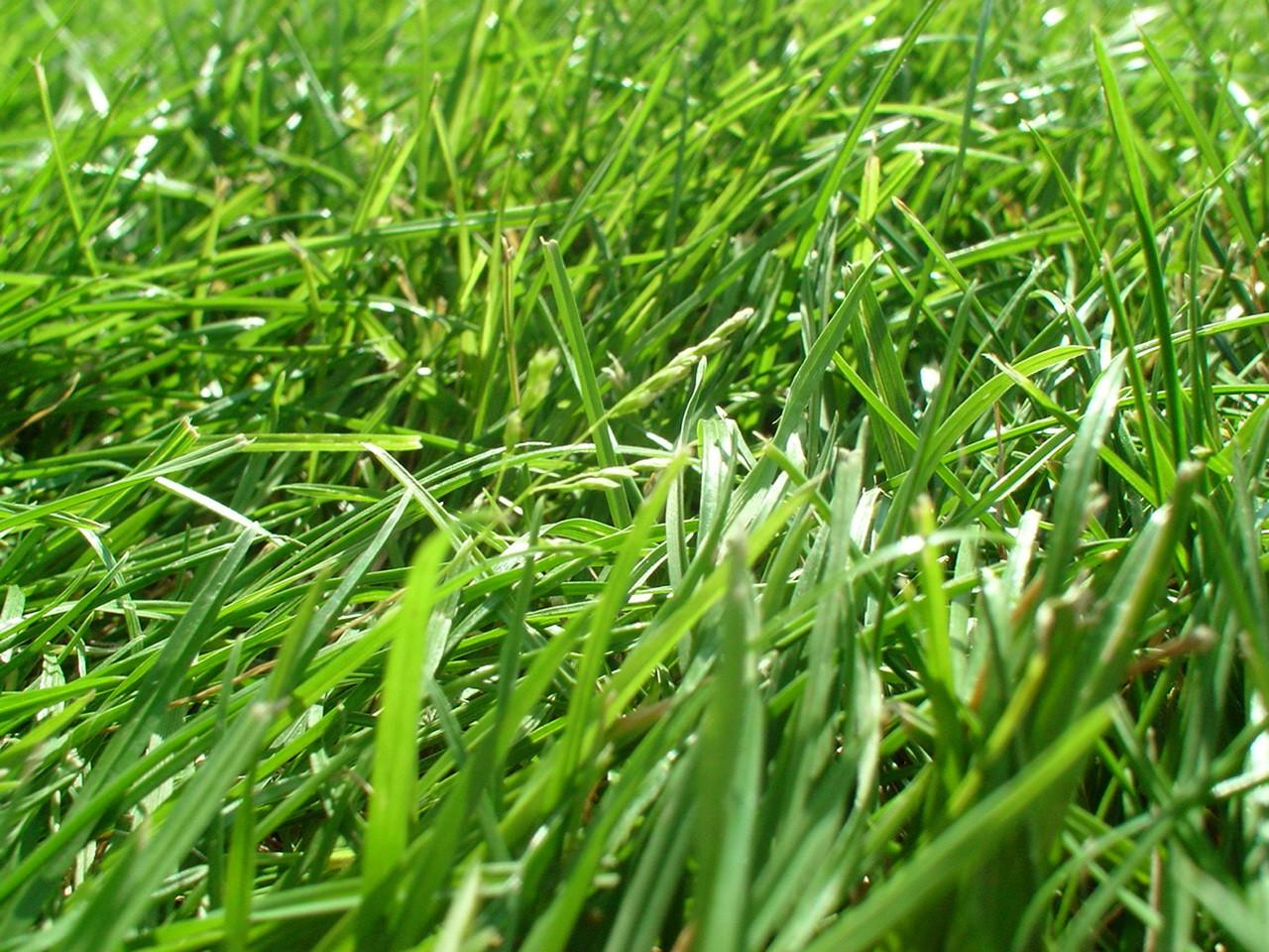 Kosz obok kosiarki czy funkcja wyrzutu trawy?