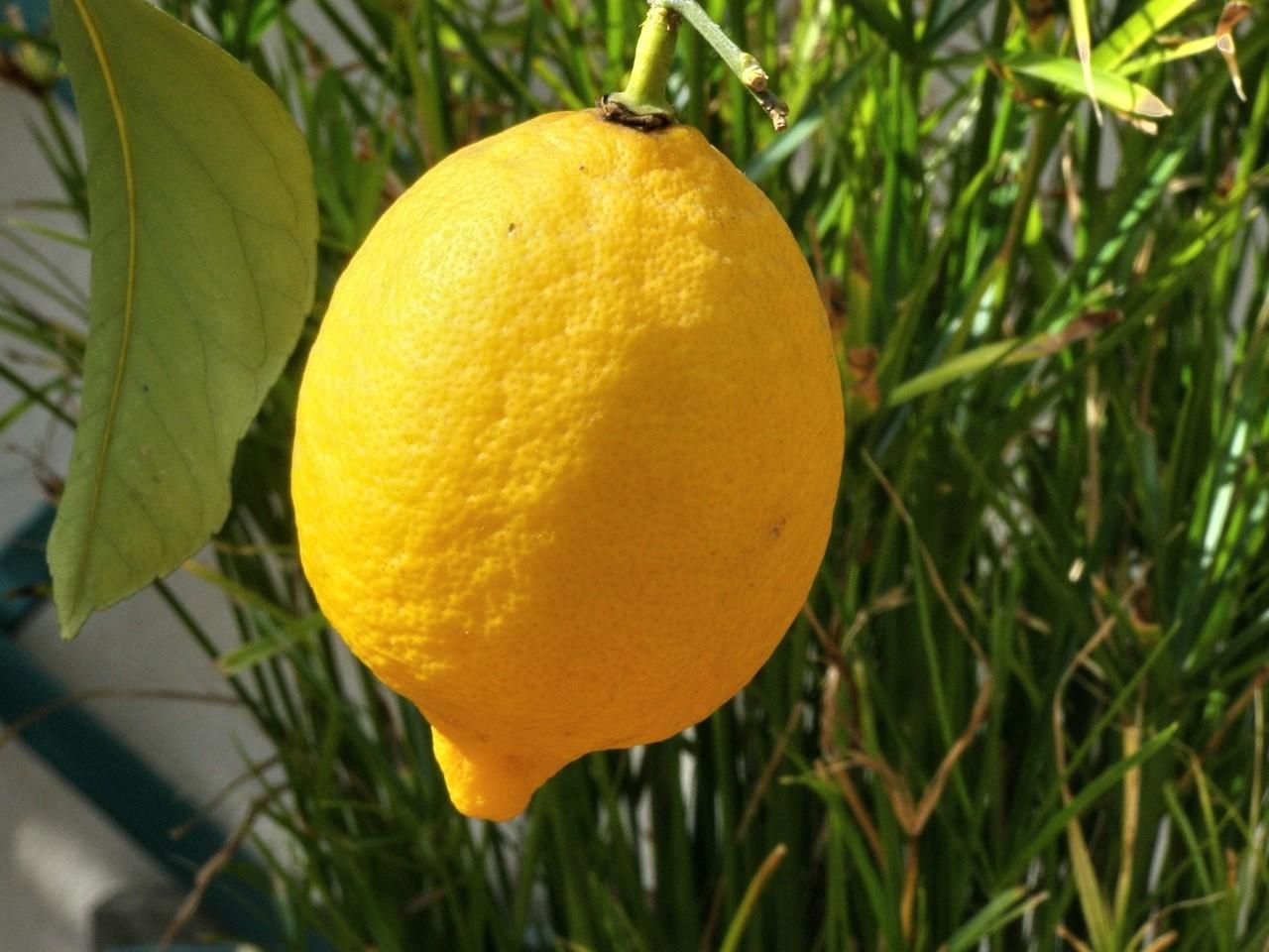 Zastosowanie cytryny i orzecha włoskiego